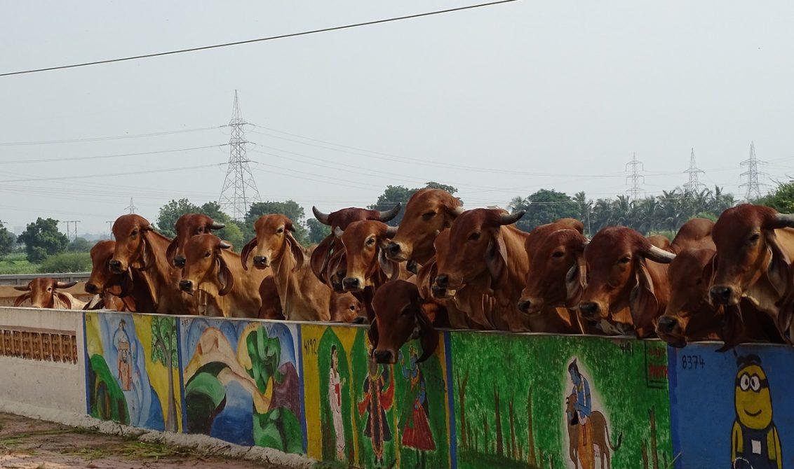Animales sagrados del hinduismo